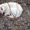 Kőtörő kalapáccsal akarták agyonütni a megunt kutyát Heves megyében