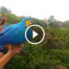 A férfi szabadon engedi a papagájokat, nem várt dolog történik utána