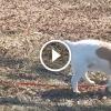 A macska nem engedi el a kutya pórázát – Figyeld a kutyus reakcióját!