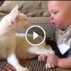 A baba megfogta a cica lábát – Figyeld mi történt ezután