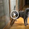 A cica kopogtatással jelzi, hogy be szeretne menni. Ezen besírsz!