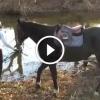 A félénk ló nem mer belemenni a vízbe – Figyeld mi történik, miután gazdája belevezeti