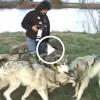 A fényképész szemben találja magát 5 hatalmas farkassal – Figyeld mi történik ezután!