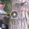 A férfi 20 méter magasra mászik fel a fára – Ha meglátod miért, Te is büszke leszel rá!