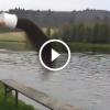 A férfi egy vödör tápot dob a tóba, amit látni fogsz az egészen döbbenetes