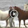 A férfi kivitte a lovakat a tengerpartra, bámulatos ami ezután történik