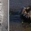 A férfi meglát valamit mozogni a mocsárban. 50 métert mászik a sárban s amit talál, döbbenetes!