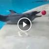 A kisfiú odadobja a labdát a delfinnek  – Nézd mi történik ezután