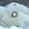 A tél varázslatos szépsége – Ez a 3 perces kisfilm téged is lenyűgöz!