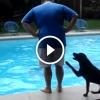 A világ legcsintalanabb kutyája, ez a labrador, aki mindenkit belelök a medencébe