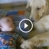 Amikor a kutyusok felügyelnek az újszülött babára. Látnod kell, milyen odaadóak!