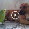 Amikor befogadták a papagájt még nem tudták hogyan fog reagálni a család kutyája