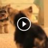Cicák és kutyák a tükör előtt – Vicces videó összeállítás