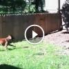 Egy kerítést épített a kutyájának – De nézd mi történik, mikor az meglátja!