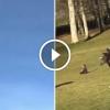 Egy hatalmas szirti sast filmezett az égen, a következő pillanatban mar a kisgyereket vitte magával – Ütős felvétel