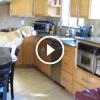 Egyedül hagyták otthon a Beagle kutyust – Figyeld mit csinál a konyhában a kis ügyes