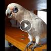Erik a rosszalkodó papagáj- Dőlünk a nevetéstől :D