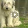 Öt éve várja elvesztett gazdáját ez a kutyus – Ilyen a kutya igazi hűsége