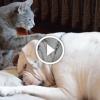 Imádnivaló ahogy próbálja felébreszteni kutya pajtását ez a macska – Ilyen aranyosat még nem láttál!