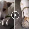 Kóbor kutya minden nap ajándékot hoz a nőnek, aki enni ad neki