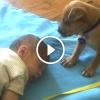 Kiskutya őrzi az alvó kisbabát, majd neki is álom jön a szemére
