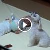 Kiskutya nyugtatja meg a felriadó kisbabát – Ennél aranyosabbat ma nem fogsz látni