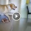 Kutyák vigyáznak és védelmezik a gyermekeket. Szuperjó videó összeállítás!