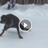 Kutyák játszanak és szórakoznak a hóban. Ez mosolyt csal mindenki arcára.