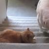 Kutyusok, akik félnek a cicáktól – Ezen besírsz