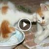 Macskák, akik nem akarják megosztani ételüket másokkal