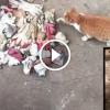 Minden nap kóbor macskákat etet – Figyeld milyen szokatlan ajándékot kap tőlük