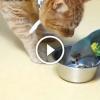 Papagájok játszanak a macskák türelmével – Vicces videó
