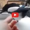 Senki nem tudja, hogy ez milyen madár lehet. De várd meg még meghallod!