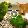 Szemtelen papagáj kap egy hatalmas nyaklevest a cicától