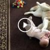Szibériai husky játszik egy 7 hónapos kisbabával – Ilyen gyengéd is tud lenni egy kutya
