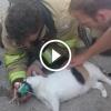 Tűzoltó élesztette újra az égő házban bennrekedt macskát