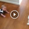 Úgy táncol ez a kiskutya, hogy a baba dől a nevetéstől