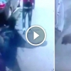 Tolvajok mentették meg a kutya életét a bezárt kocsiból