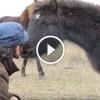 Vad ló megköszöni megmentőjének, hogy kiszabadította a lánc fogságából