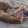 A kislány rugdosni kezdi az alvó kutyát a tengerparton, az állat reakciója teljesen váratlan volt