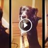 Így fogadja a cica kutya barátját 10 napos távollét után