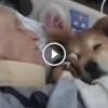 Az súlyosan beteg nőhöz bevittek egy idős terápiás kutyát, nagyon megható!