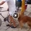 A férfi bemegy a boltba, figyeld mit csinál a kutyája addig
