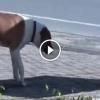 Kutya meglát egy sebesült macskát az út szélén, amit tesz az szavak nélkül hagy