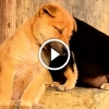 Állatok próbálnak ébren maradni – Aranyos, vicces videó