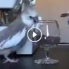 Ez a papagáj biztos macska volt előző életében