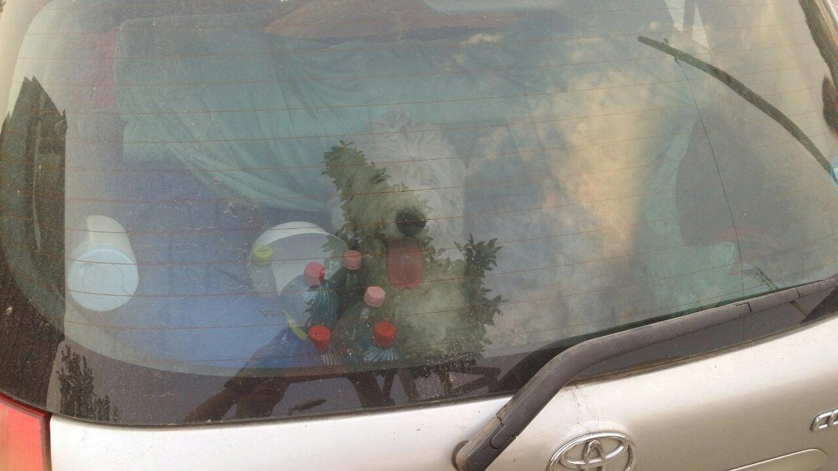 Órákra a kocsiban hagyta a kutyáját, majd még ő volt felháborodva