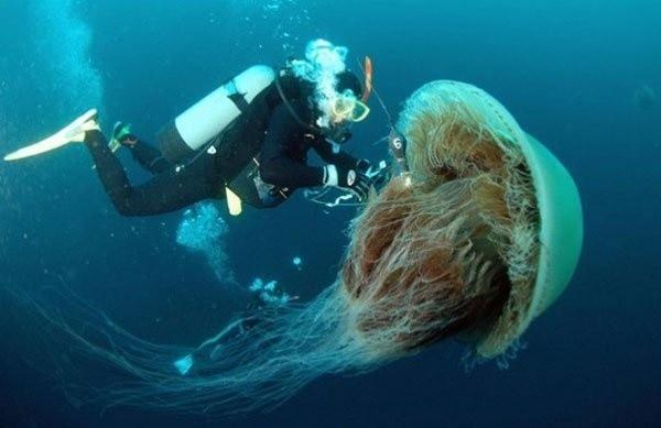 13-nomura-meduza