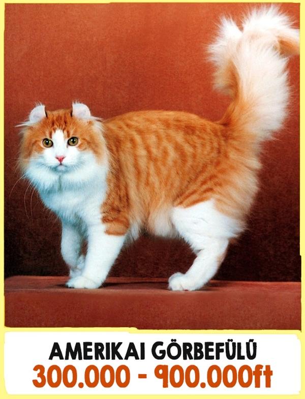 A világ legdrágább macskái9