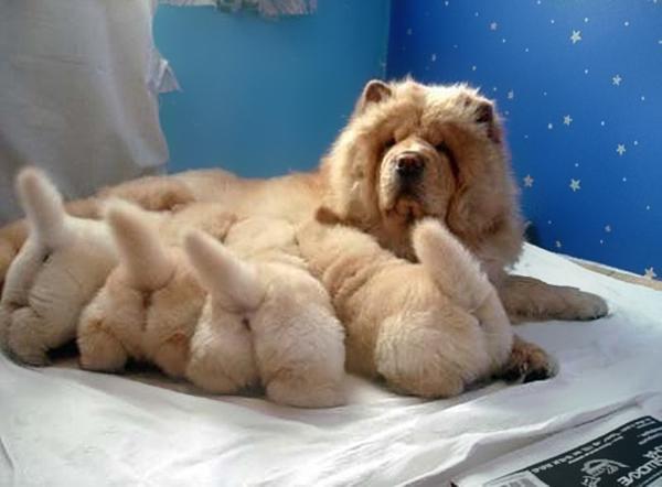 Anya kutya és picijük13